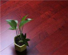 酒红色舞台木地板